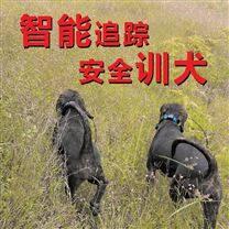 VHF无线P68防水防丢猎犬项圈跟踪器