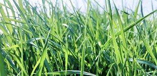 推动智慧农业更好更快发展 为乡村振兴注入强劲动能