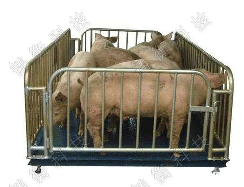 牲畜用称重地磅