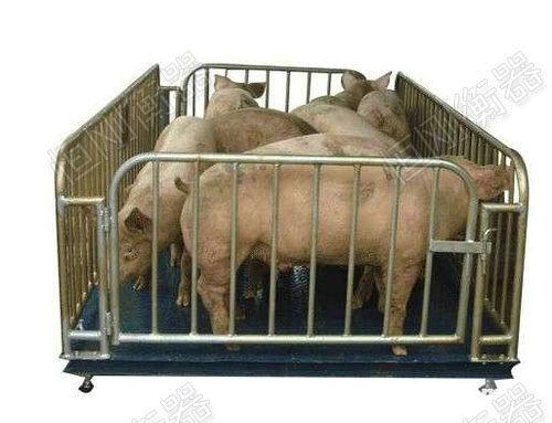 带围栏生猪秤